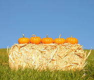 Pumpkins in basket. Outdoor Royalty Free Stock Images