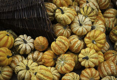 Pumpkins in the basket orange yellow and reddish colors Royalty Free Stock Photos