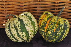 Pumpkins with Basket. Thanksgiving harvest of pumpkin squash with basket Royalty Free Stock Photos