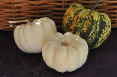 Pumpkins with Basket. Thanksgiving pumpkin squash in a basket Royalty Free Stock Image