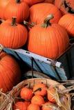 Pumpkins in baskets Stock Images