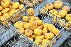 Pumpkins in baskets Stock Photography