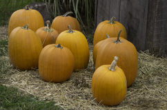Pumpkins on a bed of straw Royalty Free Stock Photography