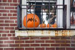 Pumpkins behind bars Stock Photography