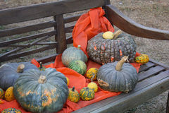 Pumpkins on the bench. Some pumpkins on the bench Royalty Free Stock Image