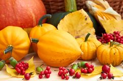Pumpkins, berries, fallen leaves, corn, acorn on wooden background. Various pumpkins with magnolia-vine, dog rose berries with acorns and fallen autumn leaves royalty free stock photography