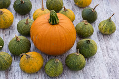Pumpkins, big and small Stock Image