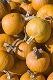 Pumpkins in a bin. At the farmers market royalty free stock image