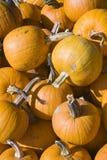 Pumpkins in a bin royalty free stock image