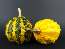 Pumpkins on black background Stock Image