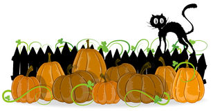 Pumpkins and black cat Royalty Free Stock Photos