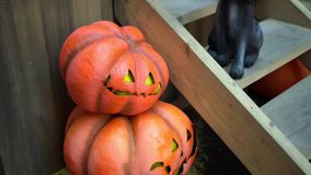 Halloween home decorations- Pumpkins and a black cat at the porch of the house stock footage
