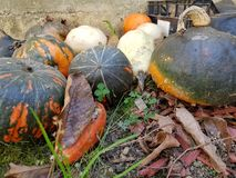 Pumpkins. Black with red colour  Pumpkins Royalty Free Stock Photo