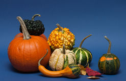 Pumpkins on blue background Royalty Free Stock Image