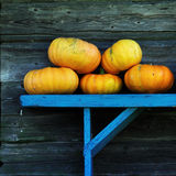 Pumpkins on a blue bench Royalty Free Stock Photos