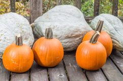 Pumpkins and blue hubbard squash Royalty Free Stock Images