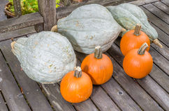 Pumpkins and blue hubbard squashes Royalty Free Stock Photo
