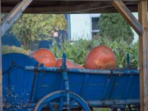Pumpkins in blue old wagon with wooden wheel stock photography