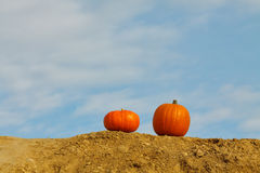 Pumpkins on the blue sky background. Two orange pumpkins on the blue sky stock image