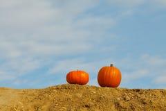 Pumpkins on the blue sky background. Two orange pumpkins on the blue sky Stock Image