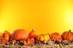 Pumpkins border. Halloween - many different pumpkins on straw in front of orange background with copyspace Royalty Free Stock Photography