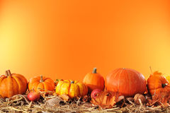 Pumpkins border Stock Photos