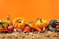 Pumpkins border Stock Images