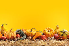 Pumpkins border. Thanksgiving - many different pumpkins on straw in front of orange background with copyspace Stock Photography