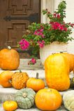 Pumpkins and bougainvilla:  Halloween in the South Royalty Free Stock Images