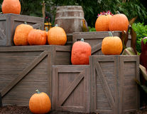 Pumpkins on Boxes. Pumpkins on some old wooden boxes Royalty Free Stock Image