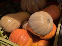Pumpkins in boxes for sale at farmers market stock photos