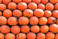 Pumpkins. Bright Orange stacking Pumpkins tiles Royalty Free Stock Images