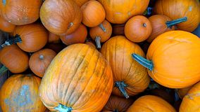 Pumpkins in bulk. Can be used as background or wallpaper and for other possibilities to modify to your taste stock images