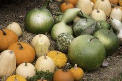 Pumpkins And Bushel Gourds Stock Photos