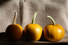 Pumpkins On Canvas Stock Photo