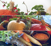 Pumpkins, carrots, seeds, butternut squash and herbs Royalty Free Stock Image