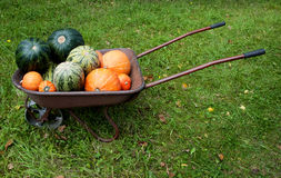 Pumpkins in the cart Royalty Free Stock Images