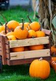 Pumpkins in a cart Stock Photos