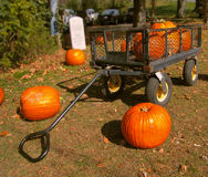 Pumpkins in a cart Royalty Free Stock Photos
