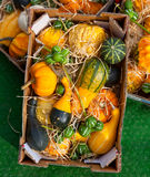 Pumpkins in cartoon box Stock Photography