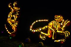 Pumpkin Art: Theropod Dinosaurs. Pumpkins carved and backlit to create art, here, a pair of Therapod `three toed` dinosaur skeletons, and a few glowing  jack o` Royalty Free Stock Photos