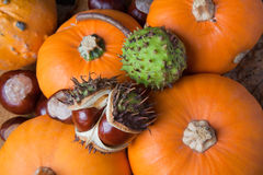 Pumpkins and chestnuts Stock Photo