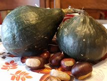 Pumpkins and chestnuts. Fresh green pumpkins and chestnuts on the table Stock Photos