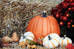 Pumpkins and Chrysanthemums Stock Images