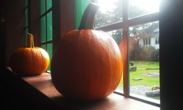 Pumpkins in a church window Royalty Free Stock Photography