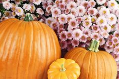 Pumpkins and Chyrsanthemums Stock Photography