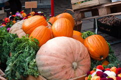Pumpkins on city-market. Big pumpkins on city-market in Copenhagen Royalty Free Stock Image