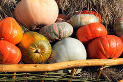 Pumpkins close up Royalty Free Stock Images