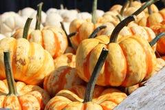 Pumpkins 2 Stock Photography