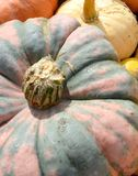 Pumpkins in blue, pink and yellow Stock Photography